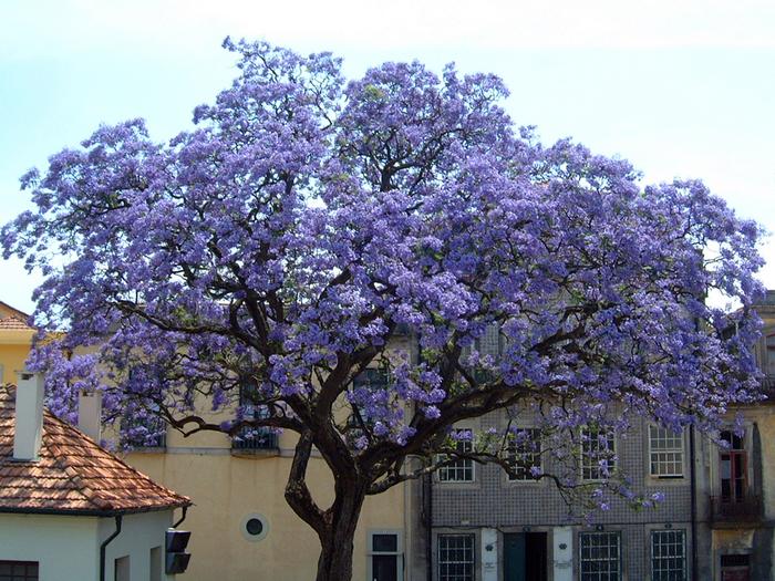 Pomi ornamentali cu crestere rapida